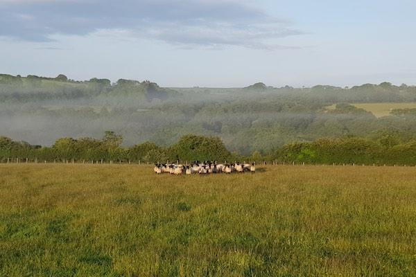 Pembrokeshire Lamb Fresh Meat Boxes Wales